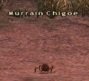 Murrain Chigoe
