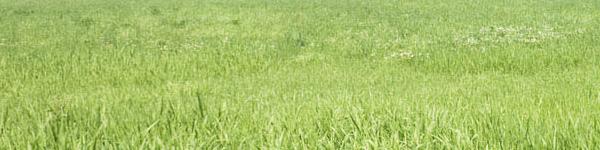 File:Habitat-grassland.jpg