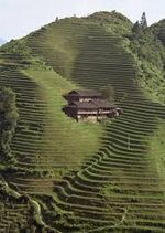 The Ricefields