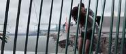 Sam helps Olivia to cross the bridge