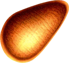 File:Pram Nut.png