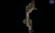 Gil Turtle Path.jpg