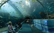 Georgia Aquarium - Ocean Voyager Tunnel Jan 2006