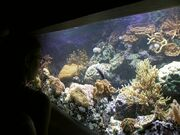 Aquarium fg01