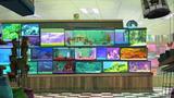 File:Fish Tank.png