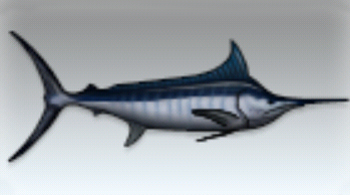 File:Blue Marlin.jpg