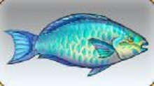 File:Princess Parrotfish.jpg
