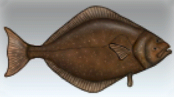 File:Halibut.jpg
