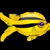 Bicolor Chromis (1)