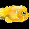 Citron Goby (1)