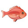 Red Snapper (1)