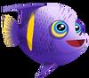 Asfur Angelfish (baby)