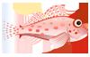 Coral Hawkfish (1)