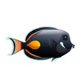 Achilles Tang (1).png