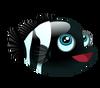 Black Percula (baby)