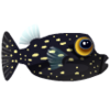 Spotted Boxfish (1)