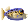 Immaculate Boxfish (1)