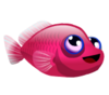 Berry Dottyback (baby)