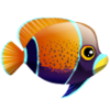 Majestic Angelfish (1)