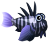 Charcoal Lionfish (baby)