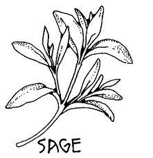 File:SAGE!.jpg
