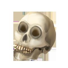 File:Human skull.png