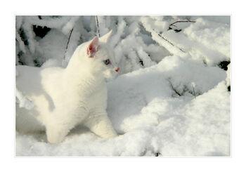 Snowkit.LifeImage
