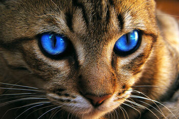 Dark blue cat eye by whozzy94-d46ab2k