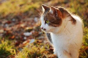 Make friends with strange cats by wintersafari-d3ayvj0