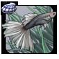 Silver Guppy