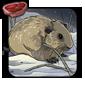 Arctic Lemming