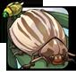 Two-tone Brown Beetle