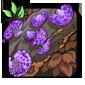 Leechroot Mushroom