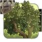 Leafy Gladeboughs
