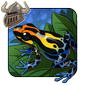 Poison Dart Frog Companion