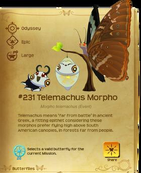 Telemachus Morpho§Flutterpedia