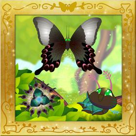 Paris Peacock Swallowtail§Facebook