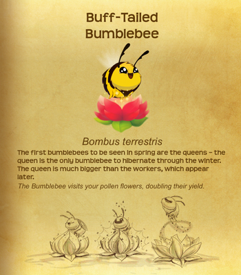 Buff-Tailed Bumblebee§Flutterpedia