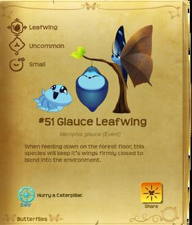Glauce Leafwing§Flutterpedia