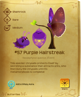 Purple Hairstreak§Flutterpedia