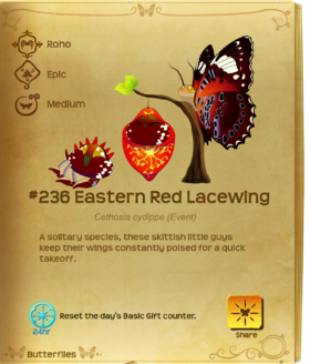 Eastern Red Lacewing§Flutterpedia