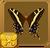 Bahamian Swallowtail§Headericon