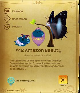 Amazon Beauty§Flutterpedia