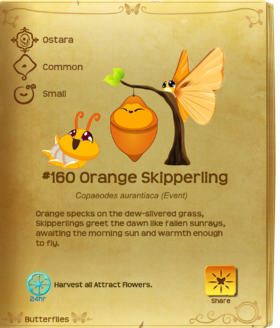 Orange Skipperling§Flutterpedia