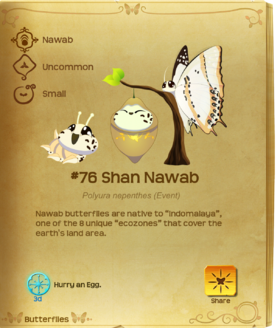 Shan Nawab§Flutterpedia