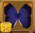 Purple Owl Butterfly§Headericon