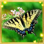 Flutterfact20140901HearingButterflies