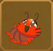 Mabille's Red Glider§Caterpillar