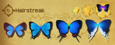 Hairstreak Set§Flutterpedia