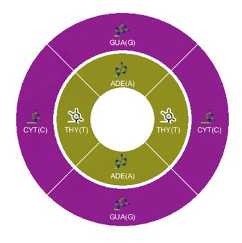 Level 8-3 DNA Pairing DNA Wheel